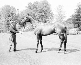 Sir Ivor with Lester Piggott (553-03)